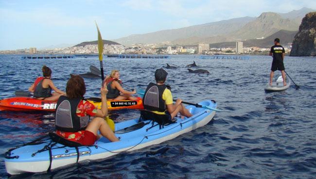 Viendo delfines en kayak y paddle
