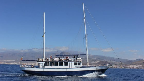 dolphin whales sailing tenerife