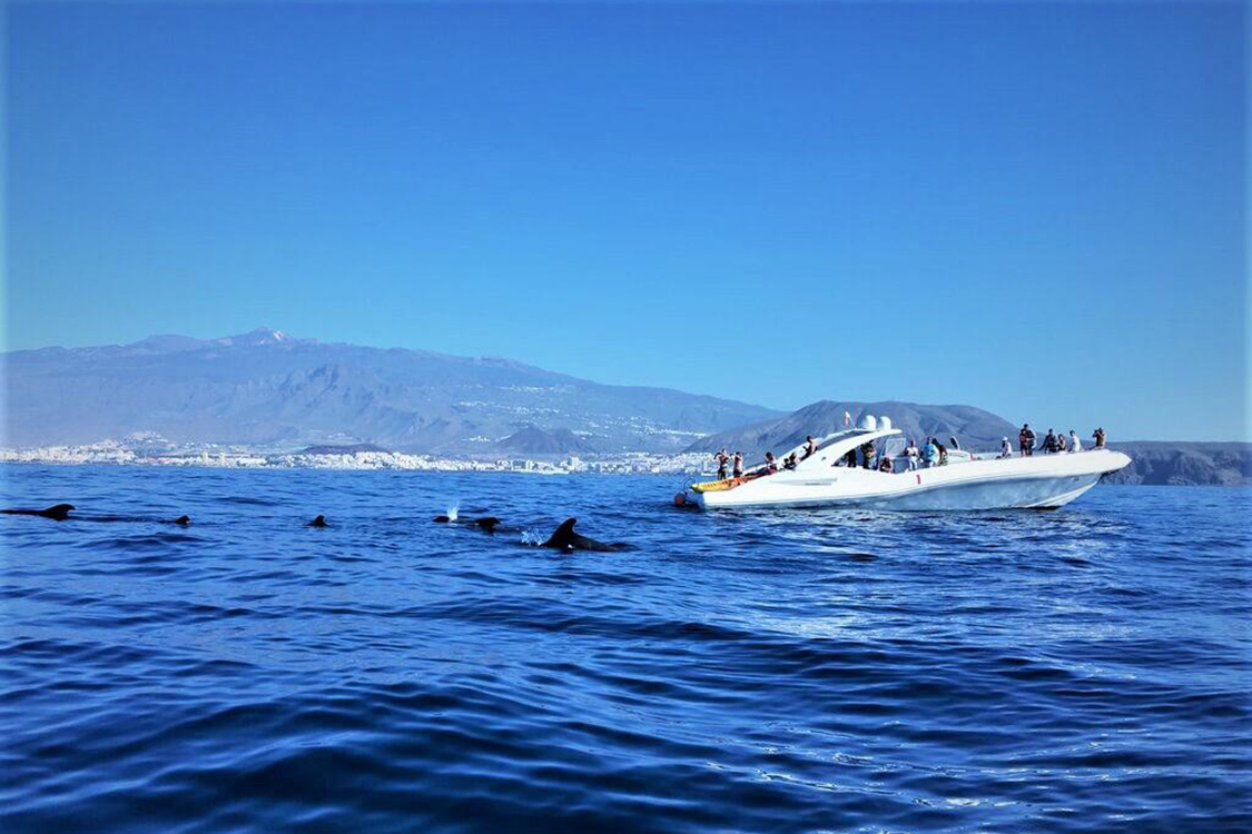 watersports-tenerife-sailing-dolphins